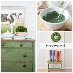 Milk Paint Boxwood